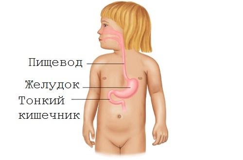 желудок ребенка