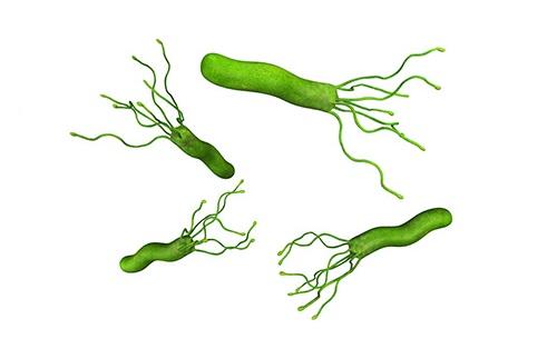 Хеликобактерии атрофический гастрит
