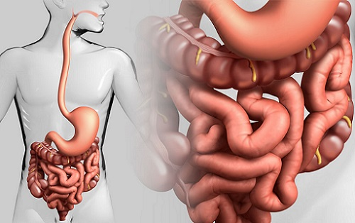 кишечник и диета