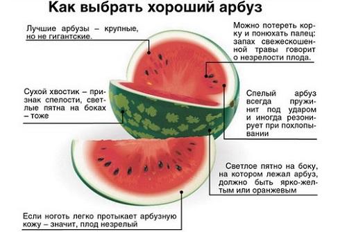 выбор арбуза
