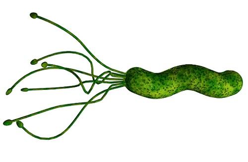 бактерия и язва