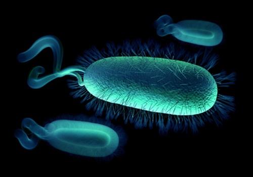 Действие Де-Нола на хеликобактерии