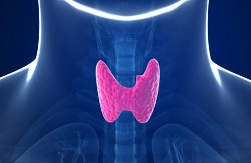 щитовидная и гастрит