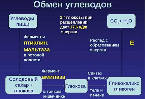углеводный обмен