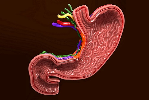 желудок и язва