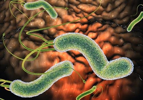 Заражение хеликобактериями