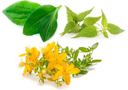 лечение дуоденита травами