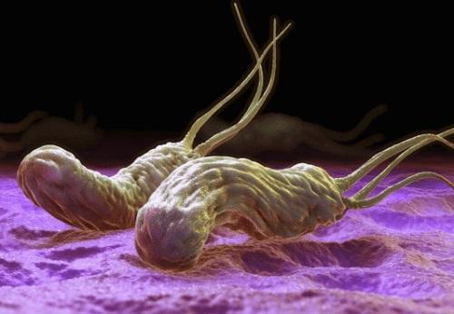 Возбудитель хеликобактерия пилори
