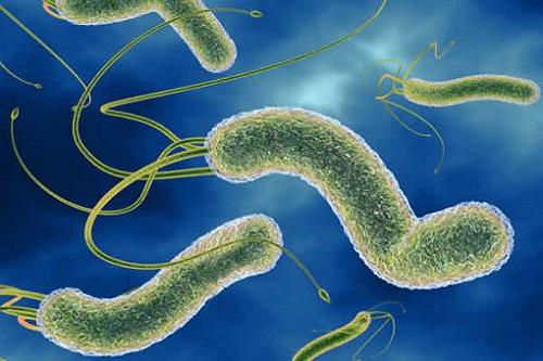бактерия в желудке