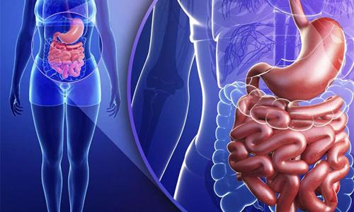 состояние органов брюшной полости
